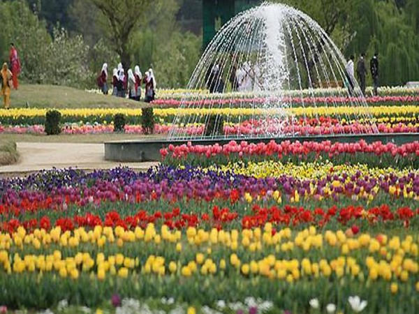 Asia's largest tulip garden in Srinagar gets high-tech cold storage facility