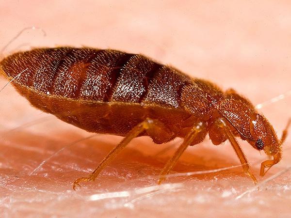 Federal workers sent home due to bedbug infestation