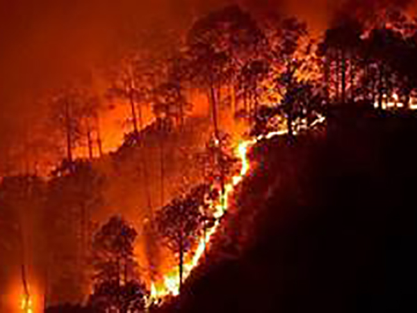 Forest fires surge in Brazil's Amazon rainforest, prompting fears for 'planet's lungs'