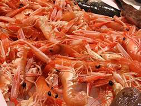 }Why shrimps are being turned into batteries to store renewable energy
