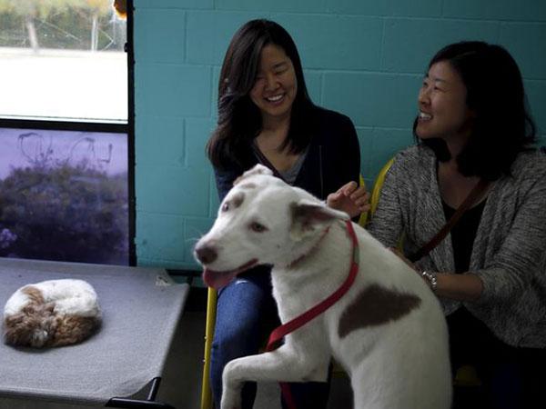 Pet adoptions, fostering spike amid coronavirus restrictions
