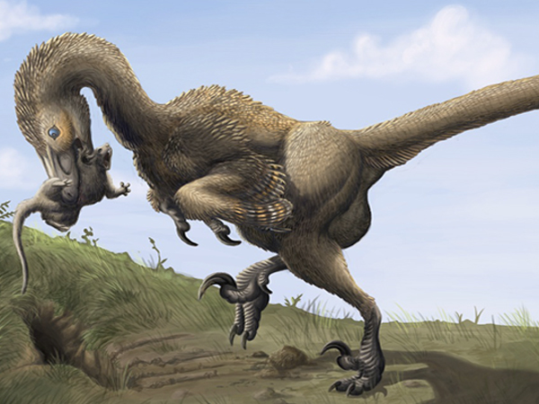 'A scientific gold mine': Alberta fossil sheds new light on how raptors evolved