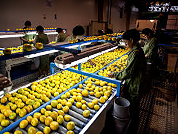 Denmark's Orana to invest $ 1.5 mn to set up fruit processing plant in Sri Lanka