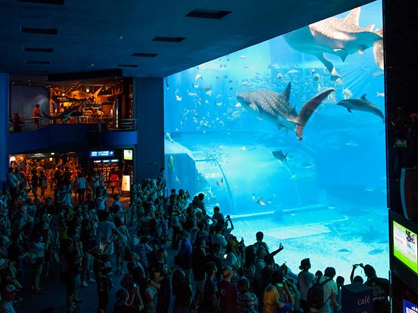 Aquarium in Okinawa closed amid surge in cases