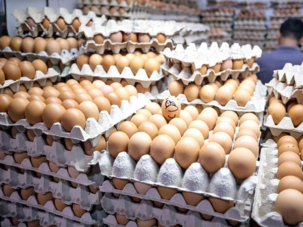 Local egg prices drop due to logistical issues
