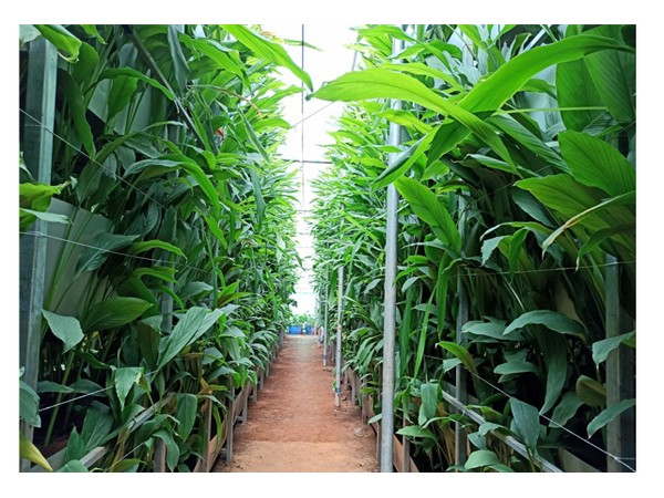 A S Agri and Aqua LLP - Pioneering force behind Hi-Tech Soil-Based Vertical Farming in India