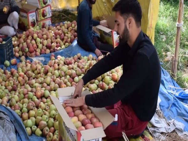 J-K apple growers express happiness over new farm laws