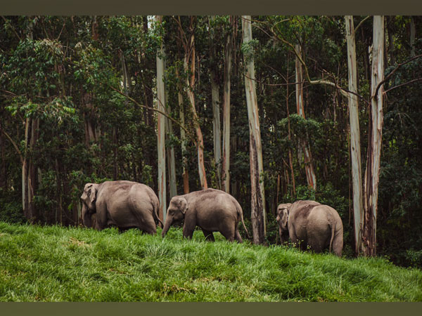 Best National Parks in Kerala to visit for families