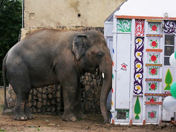 Kaavan, also known as the world's loneliest elephant (Credit: Reuters Pictures)