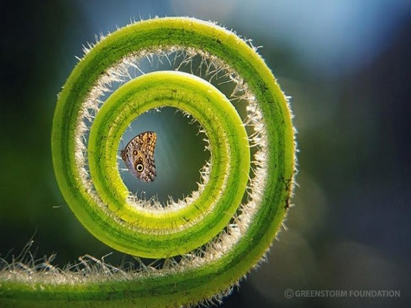 Rakayet Ul Karim Rakim of Bangladesh wins the Greenstorm International Nature Photography Contest