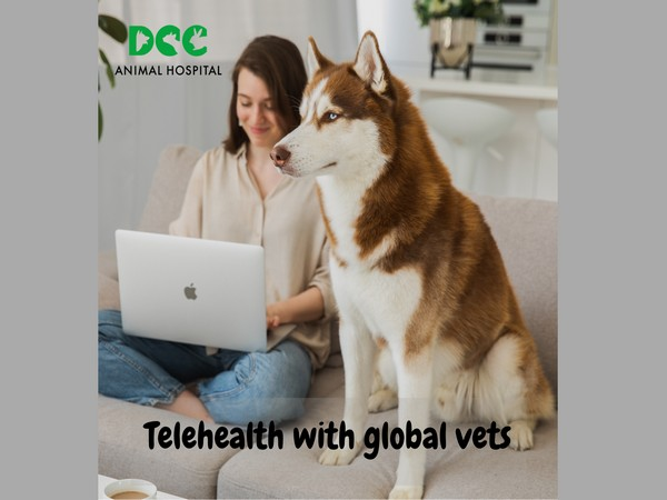DCC Animal Hospital, extends telehealth services across India to support pet healthcare as a priority no matter where you are
