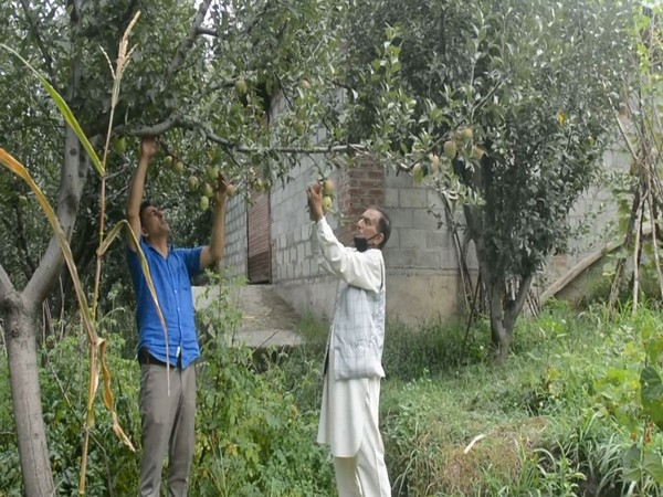 Visual from a orchard in Anantnag, Jammu and Kashmir
