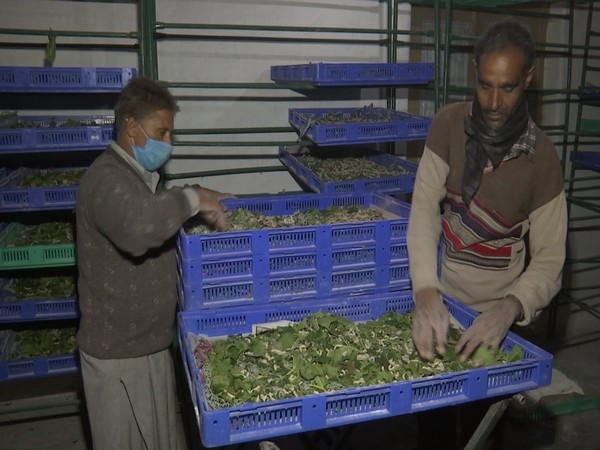 A visual from the Silkworm Seed Station in the Kashmir Valley. (Photo/ANI)