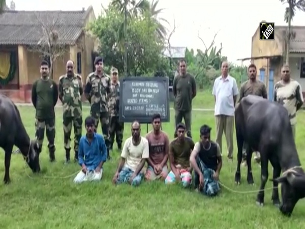 BSF officials arrest 5 Bangladeshi cattle smugglers from West Bengal