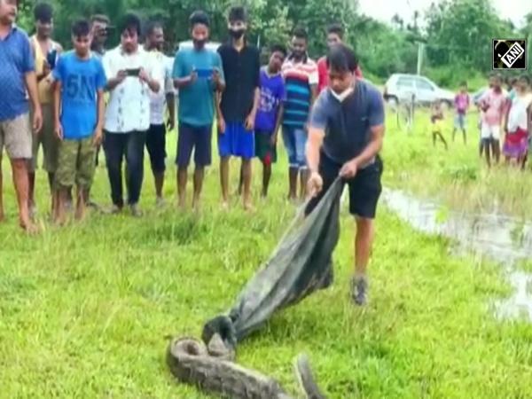 16-feet-long Burmese python rescued in Assam's Nagaon
