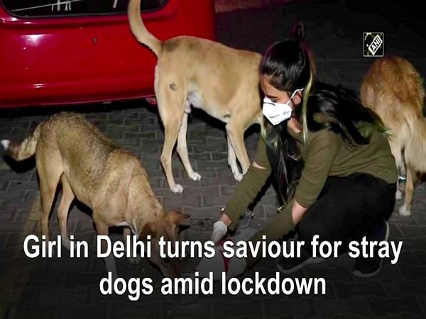 Girl in Delhi turns saviour for stray dogs amid lockdown