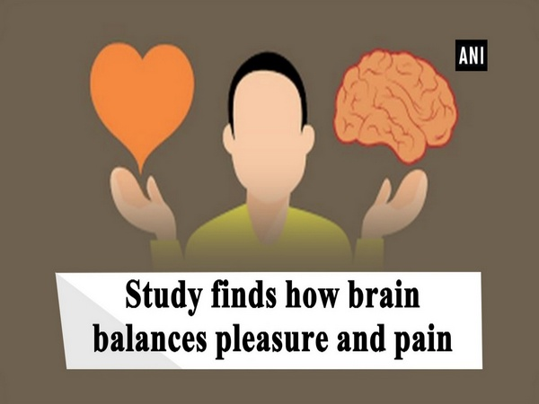Study finds how brain balances pleasure and pain
