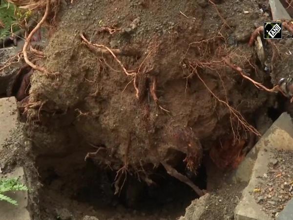 Cyclone Nisarga: Tree uprooted in Mumbai's Hutatma Chowk
