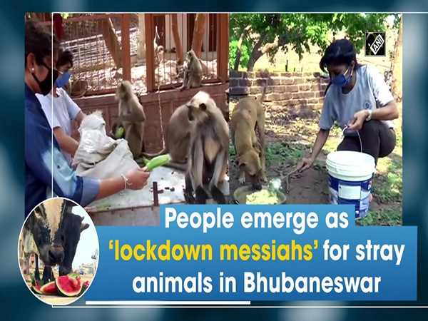 People emerge as 'lockdown messiahs' for stray animals in Bhubaneswar