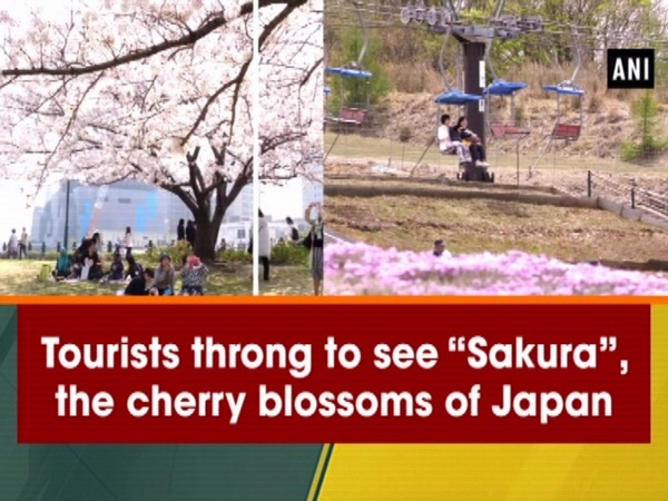 "Tourists throng to see ""Sakura"", the cherry blossoms of Japan"