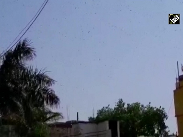 Panna district administration scares away locusts using police sirens