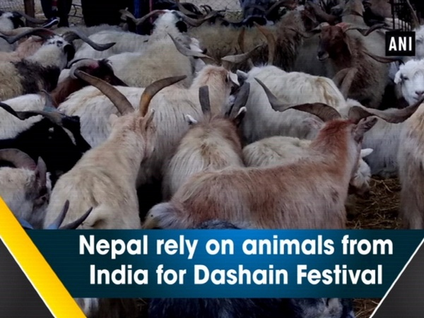 Nepal rely on animals from India for Dashain Festival
